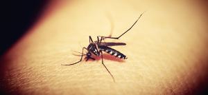 Genetically Modified Mosquitoes icon bug on fingertip